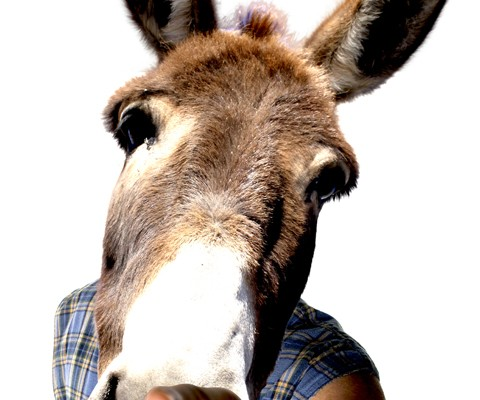 donkey-article