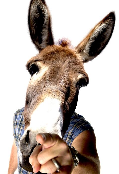donkey-article