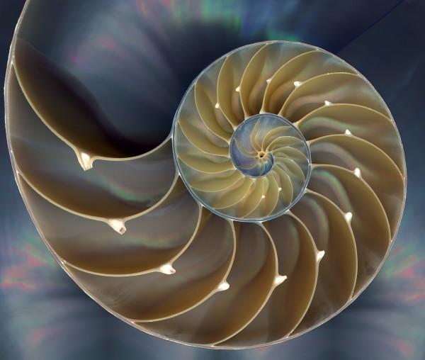 2012-04-23-16-18-45.Nautilus_Shell