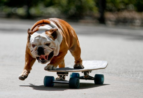skating_dog